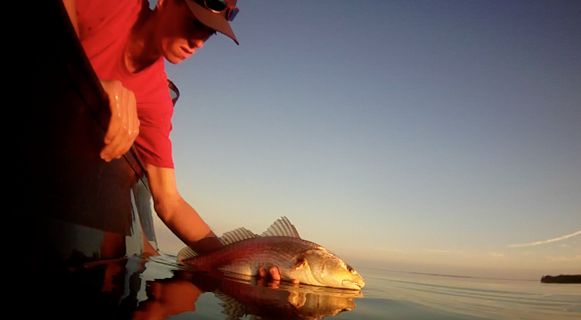 ML Tailing Reds Pod - Screenshots from GoPro 3