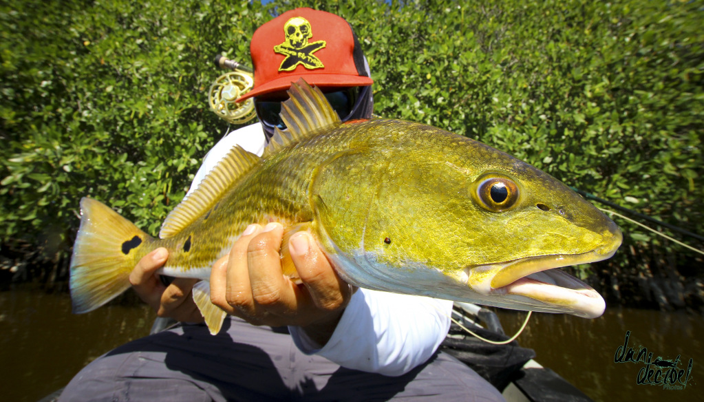 DJ Dan - Fishing as of Lately - Forum Report 2